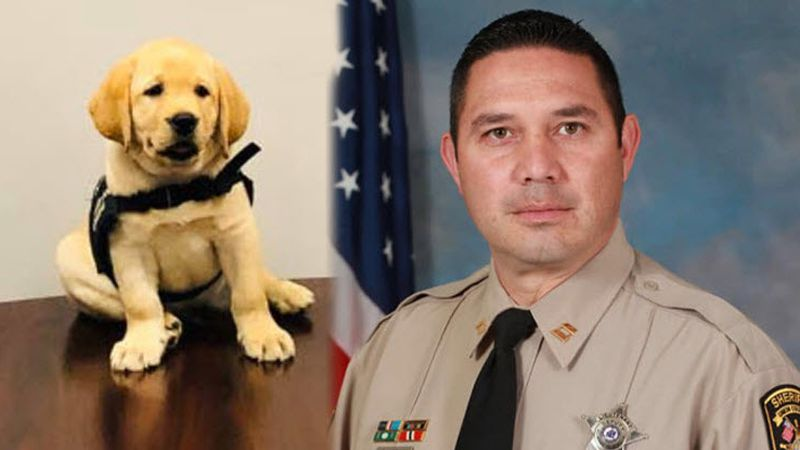 Two English labs have been named in memory of late Captain Chase Coble, who served as a law...