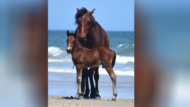 A mother horse poses with her colt, Danny