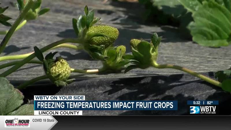 Freezing temperatures impact fruit crops in Lincoln County