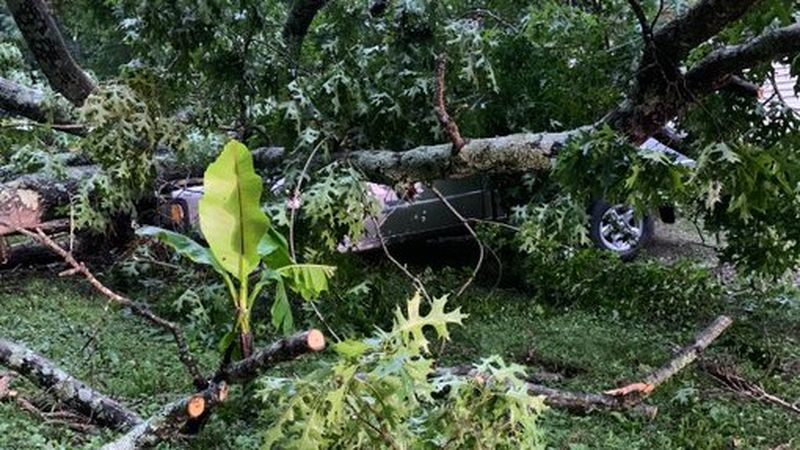 A tree fell and crushed a pickup truck in Fort Mill Tuesday morning, closing a road.