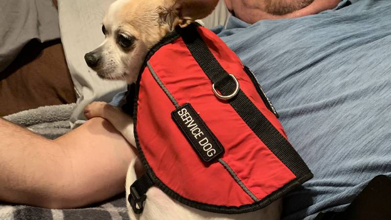 The family says the manager told them the service dog wasn't welcome because of the dog hair.