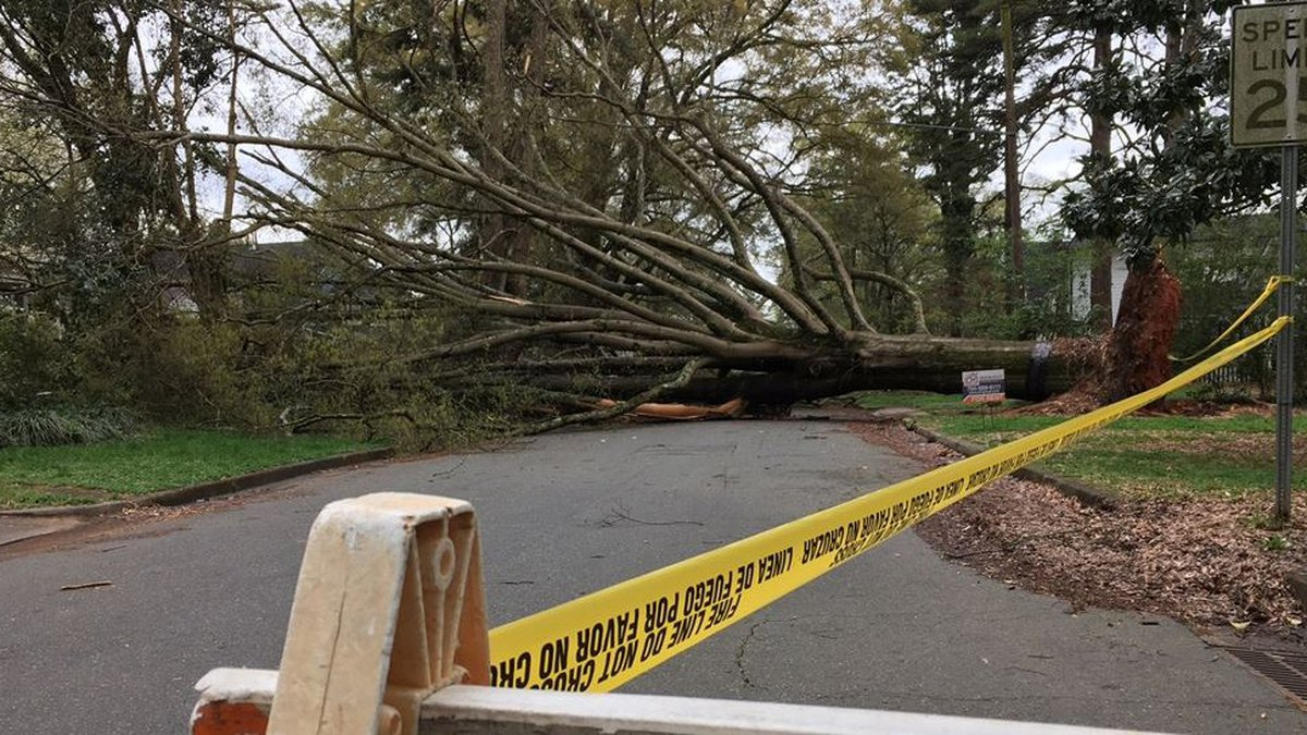 Large tree uproots in Charlotte's Plaza Midwood during Saturday's powerful storm