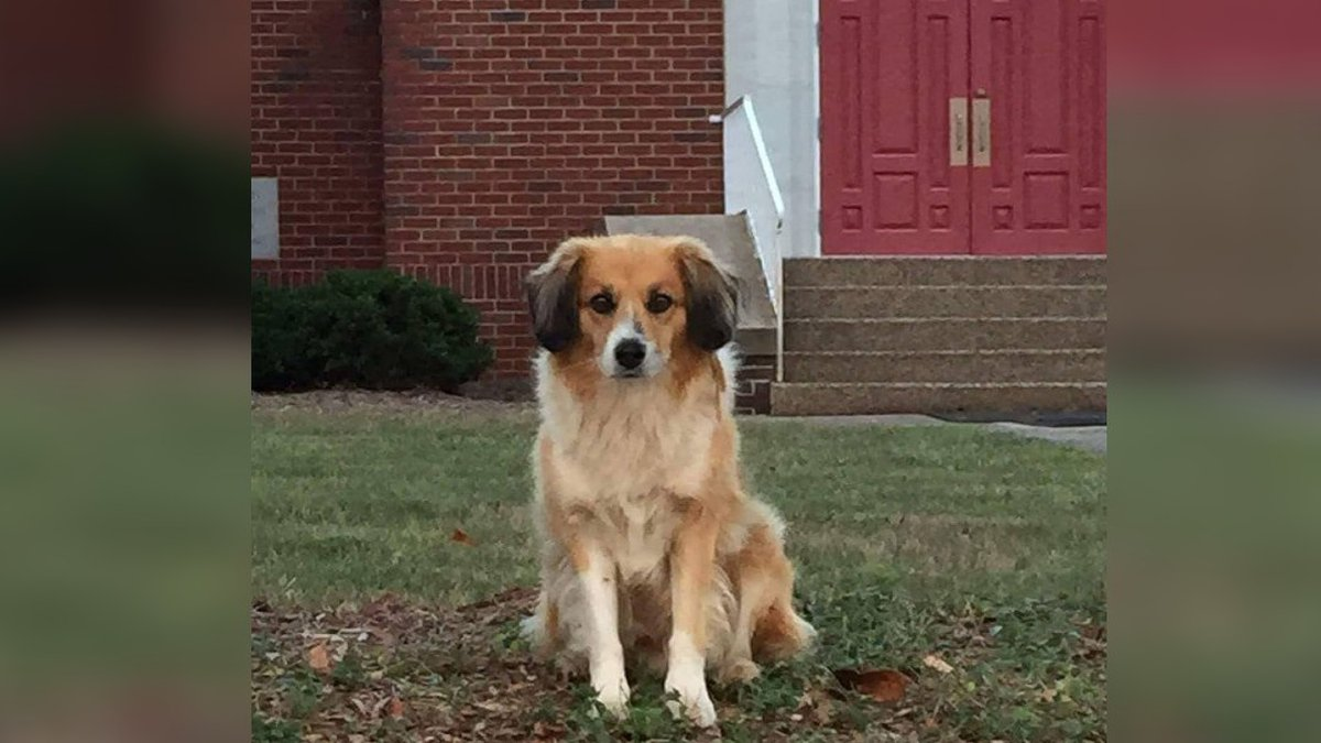 Buddy, a beloved dog in Claremont who was adopted after eight years as a stray, passed away a...