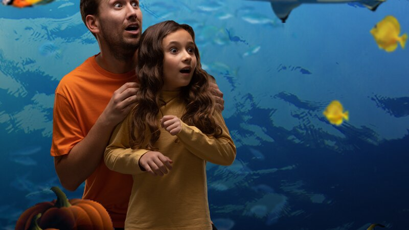 Celebrate spooky season at SEA LIFE Charlotte-Concord with singing pumpkins, frightful...