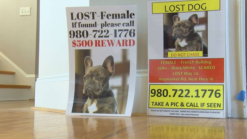 Bizarre circumstances surround disappearance of family dogs