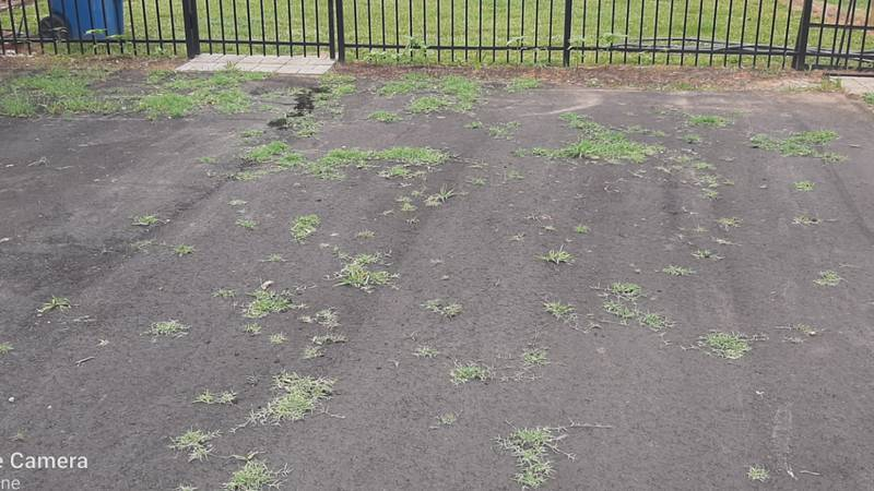 A customer of Road Worx and John Holmes shared this picture with WBTV, showing grass growing...