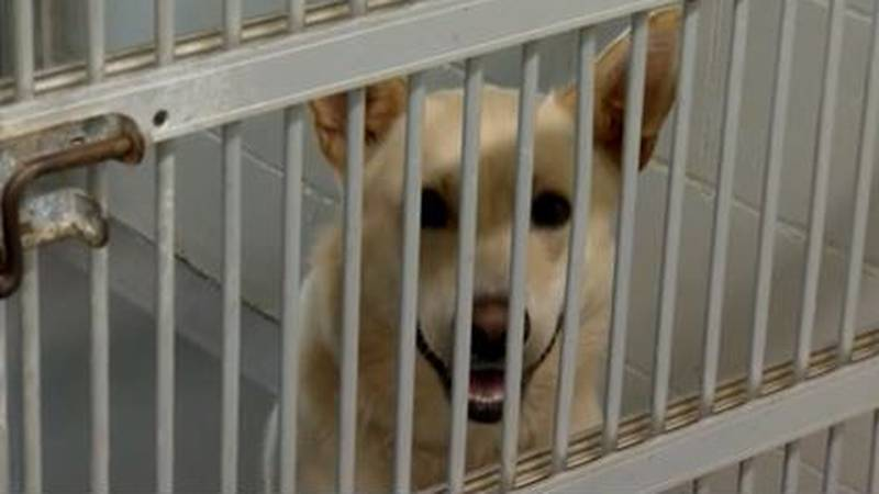 Animal Shelters scrambling to find new homes for pets surrendered as COVID restrictions eased up