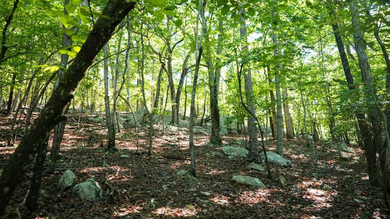With frontage on Cedar Fork Creek, all 30 acres of the property are a sight to take in.