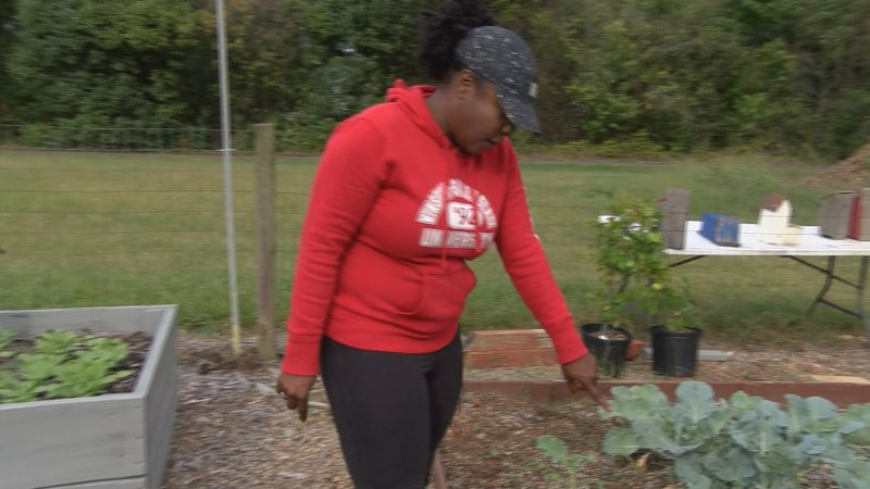 Cabbage goes missing from west Charlotte community garden.