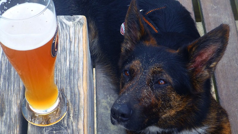 A man registered a beer as his emotional support animal in New York.