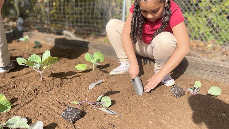 Happy Roots and Communities In Schools are partners with Knox in this project.