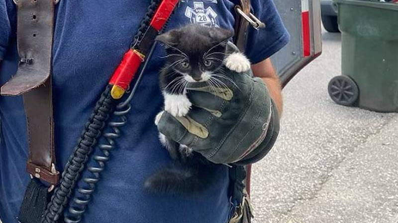 Goose Creek firefighters say they rescued a kitten that became trapped inside the wall of a...
