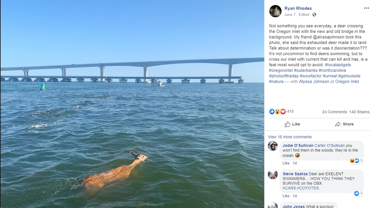 A deer was seen swimming on Oregon Inlet this week. A photo of the moment was taken by Alvssa...