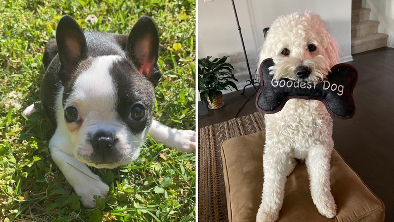 All bark, no bite: It's National Dog Day